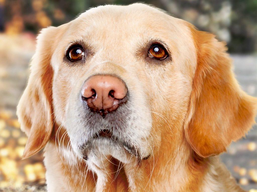 Artikel ueber Hunde Hundehaltung Hundepflege
