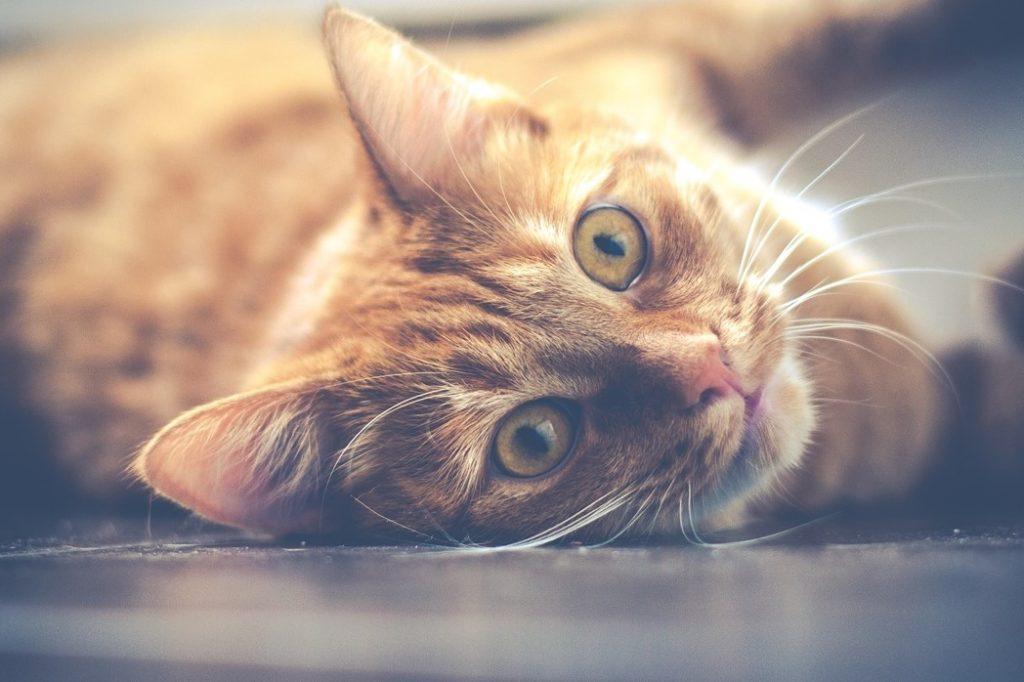 Artikel zu Katzen