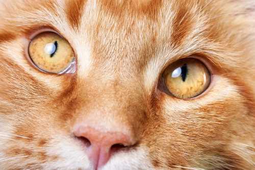 Katzen mit Peilsender suchen