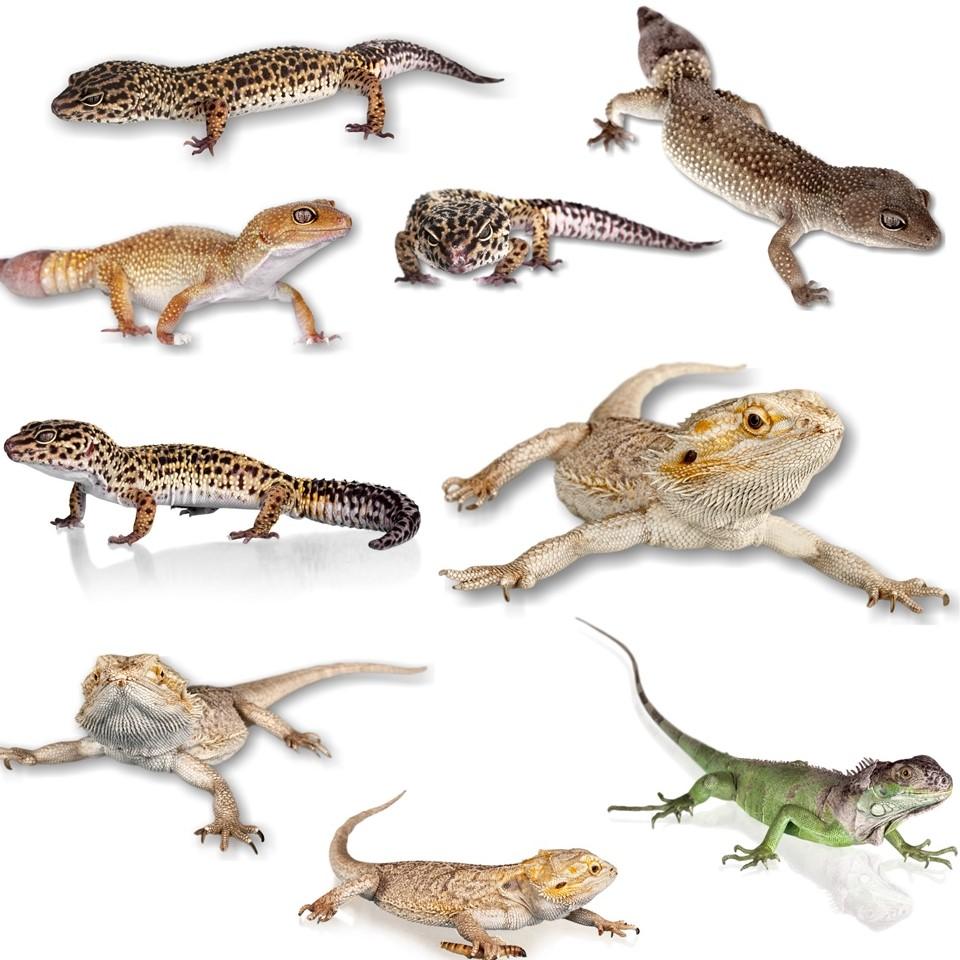artikel reptilien und terraristik