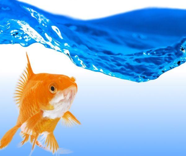 zierfische aquarium aquaristik